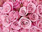 Rózsaszín rózsacsokor (id: 2544) tapéta