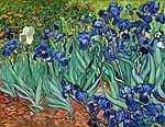 Vincent Van Gogh: Íriszek (id: 3744) tapéta
