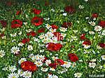 Flower fields (id: 13346) vászonkép