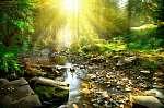 Hegyi folyó. Csendes táj a zöld erdő közepén (id: 6347) falikép keretezve