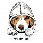 The image of the dog Beagle in the hood. Vector illustration. (id: 14449)
