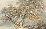 William Turner: Nagy fa (id: 20349) vászonkép óra