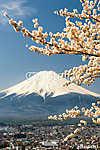 Mount Fuji a cseresznyefa ágakkal, Japánban (id: 9349) poszter