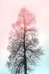 Szépség és ridegség (id: 18250) falikép keretezve