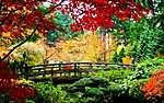 Fahíd őszi parkban (id: 651)