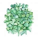 Green hydrangea flower art. Beautiful artistic backdrop. Ideal f (id: 14652) többrészes vászonkép
