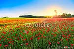 Poppies field at sunset (id: 5252)