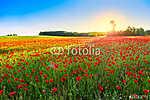 Poppies field at sunset (id: 5252) falikép keretezve