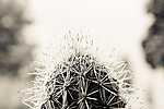 Kaktusz-makro (id: 17353) tapéta