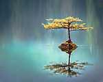 Kis fa a tó közepén (id: 17454)