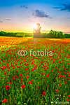 Poppies field at sunset (id: 5254) vászonkép óra