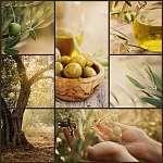 Olívaolaj kollázs (id: 4756) poszter