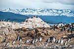 A királykarnvári kolónia egy szigeten fekszik a Beagle-csatornán (id: 9157)