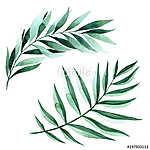 Watercolor illustration of fern leaves (id: 14658) többrészes vászonkép