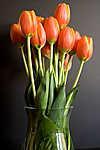Tulipánok vázában (id: 3758) többrészes vászonkép