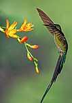 Kolibri (id: 17461) többrészes vászonkép