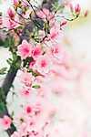 A tavasz színei (id: 18562) poszter