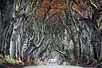 Misztikus út, Armoy, Anglia (id: 17165) többrészes vászonkép