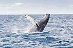 Orka (id: 18365)