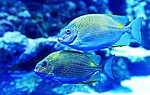 Trópusi halak (id: 16966) többrészes vászonkép