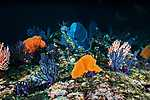 Akvárium színes korallokkal (id: 16968) tapéta