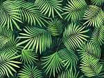 Trópusi levelek (id: 13569) tapéta