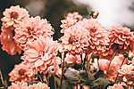 Partner Kollekció: Pasztell virágok (id: 16969) vászonkép