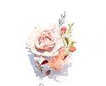 Rózsa összeállítás (id: 18370) tapéta