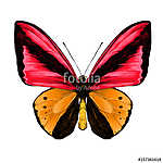 butterfly symmetric top view of orange and red colors, sketch ve vászonkép, poszter vagy falikép
