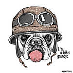 The image Portrait of the dog Bulldog in the motorcyclist helmet (id: 14471) poszter