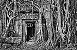 Az ókori kőből készült templomajtó és a fa gyökerei, egyszínű ki (id: 5071) poszter