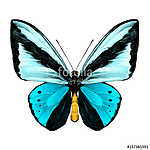 butterfly symmetric top view of light blue and blue colors, sket (id: 13872) vászonkép