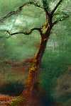 Lomb nélkül (id: 17172) falikép keretezve