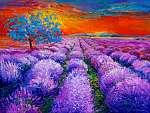 Lavender mezők (id: 4372)