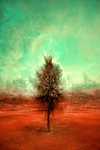 Kis fa a mezőn (id: 17173)