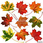 Őszi levelek gyűjtemény elszigetelt fehér háttérrel (id: 10674) falikép keretezve
