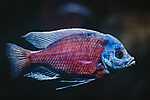 Trópusi hal  (id: 16974) vászonkép óra
