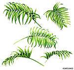 Palm Fronds Watercolor Sketch (id: 14678) többrészes vászonkép
