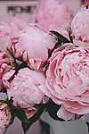 Pünkösdi rózsák (id: 18578) vászonkép