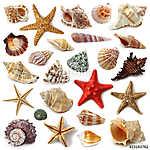 Seashell gyűjtemény elszigetelt fehér háttér (id: 10679)