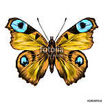 butterfly with open wings top view, the symmetrical drawing, gra (id: 13881) vászonkép