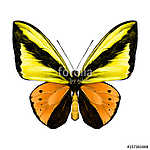 butterfly symmetric top view of orange and yellow flowers, sketc (id: 13882) vászonkép