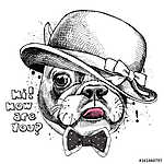 Image Portrait of French bulldog in a Elegant hat and tie. Vecto (id: 14482) poszter