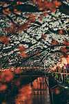 Tavasz Tokióban (id: 18582) tapéta