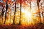 Gyönyörű őszi napfény az erdőben (id: 6283) vászonkép óra