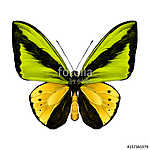 butterfly symmetric top view of green and yellow colors, sketch vászonkép, poszter vagy falikép