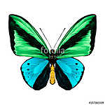 butterfly symmetric top view green and blue colors, sketch vecto (id: 13885) vászonkép