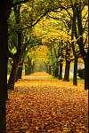 narancssárga ősz a parkban (id: 6285) többrészes vászonkép