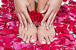 Beautiful woman's hands and legs with red rose petals (id: 14586) többrészes vászonkép