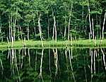 Vízben tükröződő zöld erdő (id: 1786) vászonkép